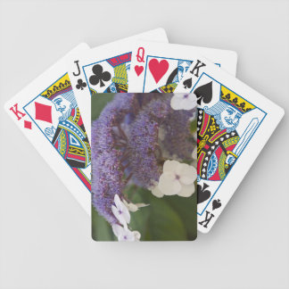 Hydrangea bloom, Dr. Sun Yat-Sen Chinese garden Bicycle Playing Cards