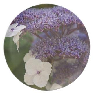 Hydrangea bloom, Dr. Sun Yat-Sen Chinese garden Plate