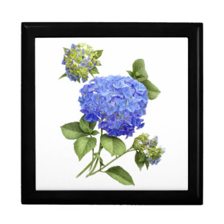 "Hydrangea ""Blue Wave"" Gift Box"