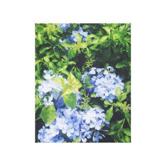 Hydrangea Canvas