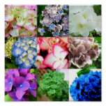 Hydrangea Collage Posters
