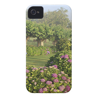 Hydrangea garden in the mist, Arzua, Spain iPhone 4 Case-Mate Cases