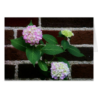 hydrangea on brick card