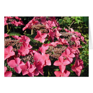 Hydrangea. Pink Flowers. Card