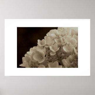 Hydrangea - Print