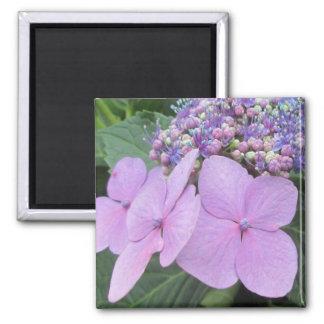 Hydrangea Purple Blooming Flower Refrigerator Magnet