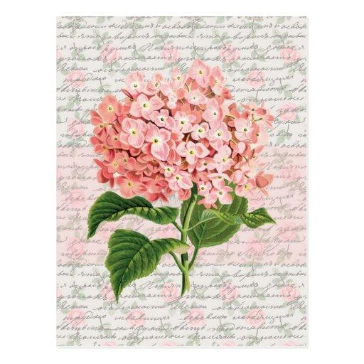 Hydrangea Vintage Dream Post Card