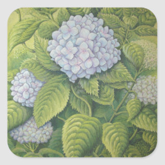 Hydrangeas at Lanhydrock, Cornwall in Pastel Square Sticker