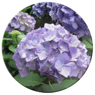 Hydrangeas at Trebah, Cornwall Porcelain Plate