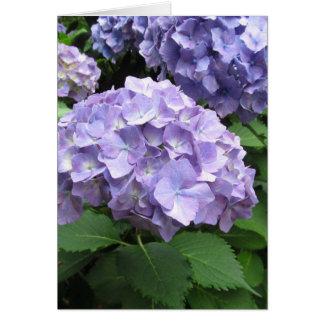 Hydrangeas at Trebah Gardens, Cornwall Card