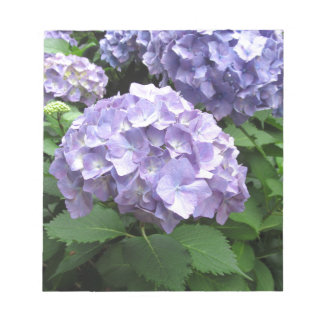 Hydrangeas at Trebah Gardens, Cornwall Notepad