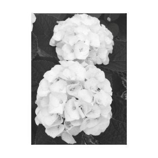 Hydrangeas Black & White Canvas Print