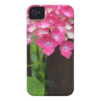 hydrangeas in bloom Case-Mate iPhone 4 cases