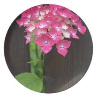 hydrangeas in bloom plates