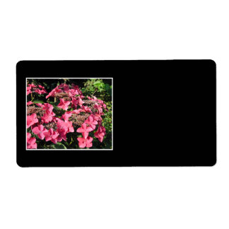Hydrangeas. Pink Flowers on Black.