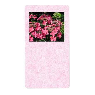 Hydrangeas. Pretty Pink Flowers.