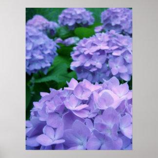 Hydrangeas {Purple} | Poster