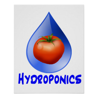 Hydroponic Tomato water drop design logo Poster