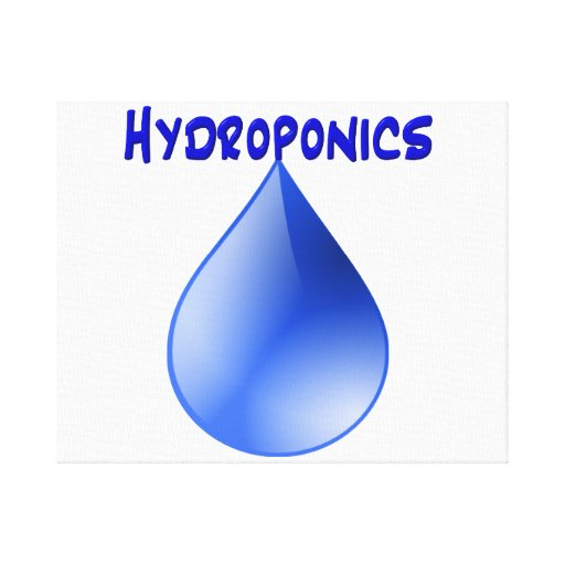 Hydroponics blue letters with blue drop graphic stretched canvas prints