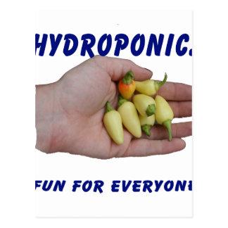 Hydroponics Fun White Habanero Peppers Hand Postcard