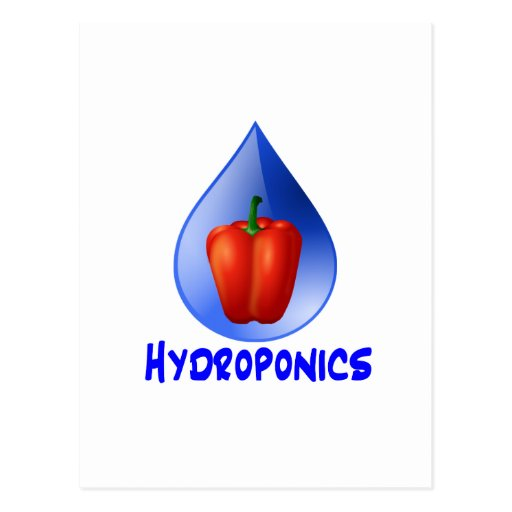 Hydroponics graphic, hydroponic pepper & drop post card