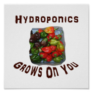 Hydroponics Grows On You Canvas Peppers Posters