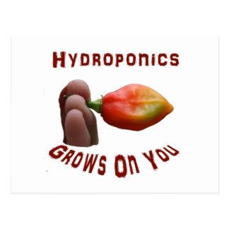 Hydroponics Grows On You habanero fingers Postcard