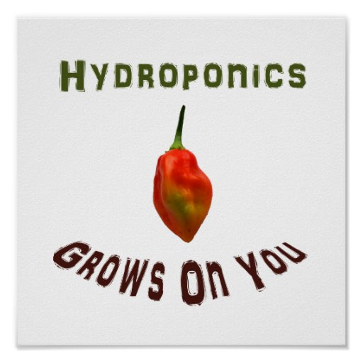 Hydroponics Grows On You Single Habanero Poster