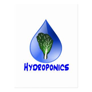 Hydroponics slogan Blue Drop with Lettuce graphic Postcard