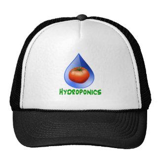 Hydroponics-Tomato, Green Text, Blue drop Cap