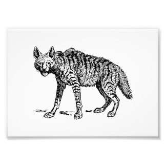 Hyena Photo Print