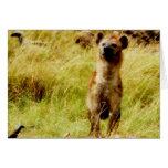 Hyena with wildebeest (gnu) card
