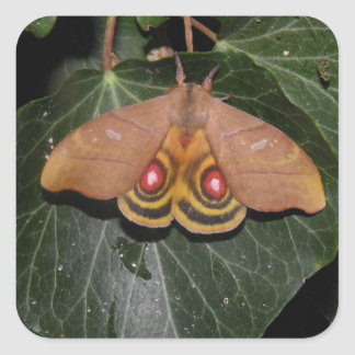 Hyperchiria incisa collectible moth sticker