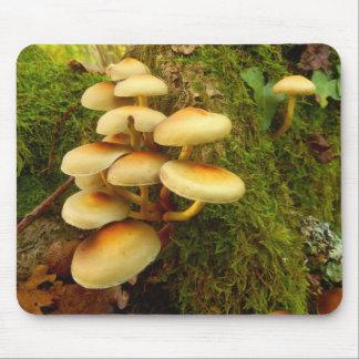 Hypholoma fasciculare Mushroom Mouse Pad