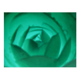 Hypnotic Camellia Flower Postcard