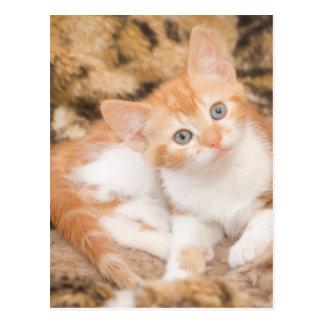 Hypnotic Kitten Postcard