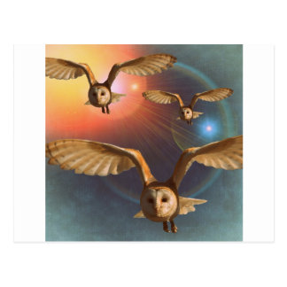 Hypnotic Owl at Sunset Postcard