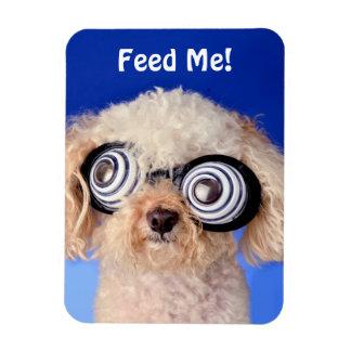Hypnotic Poodle Magnet