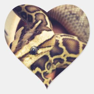 Hypo baby burmese python photo design. heart sticker