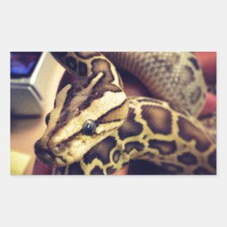 Hypo baby burmese python photo design. rectangular sticker