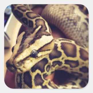 Hypo baby burmese python photo design. square sticker