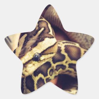 Hypo baby burmese python photo design. star sticker