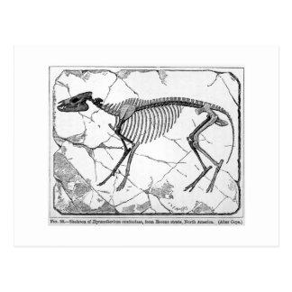 Hyracotherium venticolum art postcard