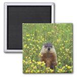 I am Groundhog Square Magnet