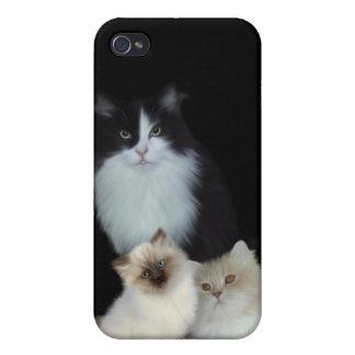 i Animal Three Cats iPhone 4 Cases