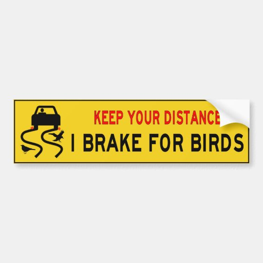 I brake for birds bumper sticker