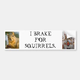 I brake for squirrels bumper sticker