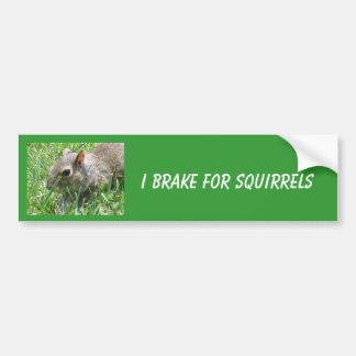 "I Brake for Squirrels featuring ""Clicker"" Bumper Sticker"