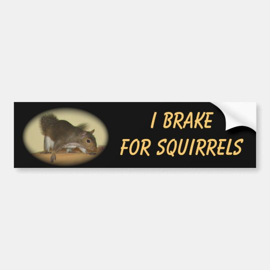 "I Brake for Squirrels featuring ""Summer"" Bumper Sticker"