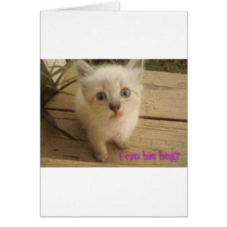 I can has hug Cute kitty Greeting Cards